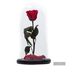 Red Piros Örök Rózsa Nagy búrában