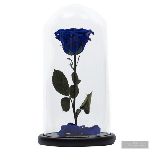 Blue / Kék Örök Rózsa nagybúrában