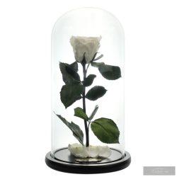 White Örök Rózsa Nagy Búrában