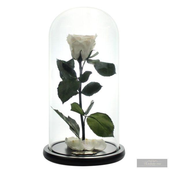White Örök Rózsa Búrában