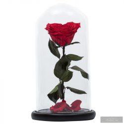 SZÍV alakú Örök Rózsa Nagy Búrában LIMITES EDITIONS