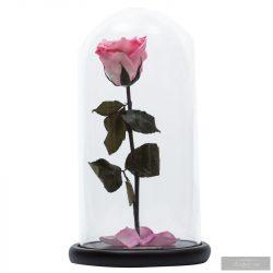 Lady Örök Rózsa