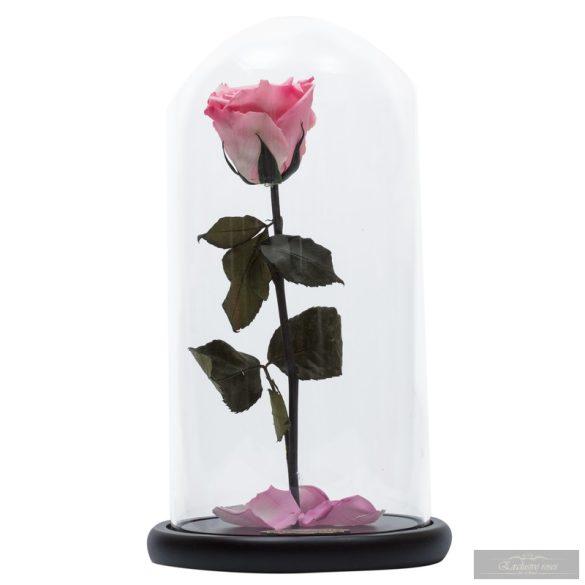 Lady Örök Rózsa Kicsi Búrában