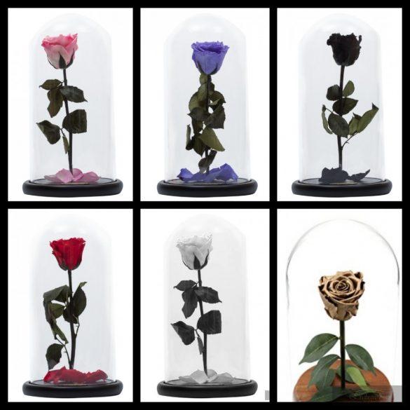 Vörös Rózsa kicsi üveg búrában