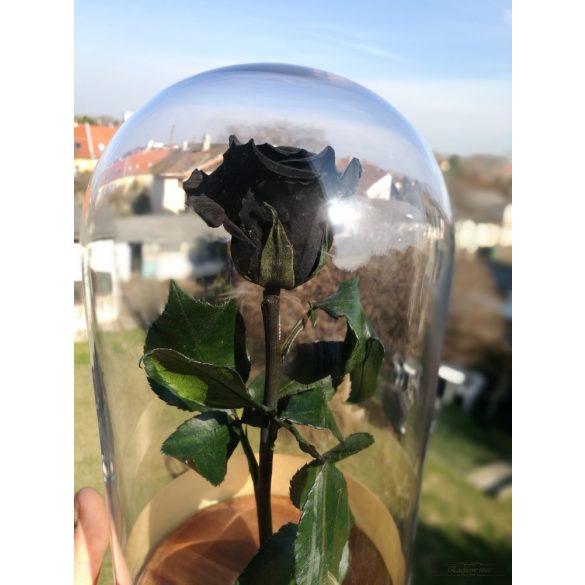 Black FeketeÖrök Rózsa kicsi búrában