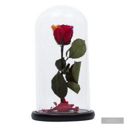 Ranibown szivárvány Örök Rózsa Nagy búrában