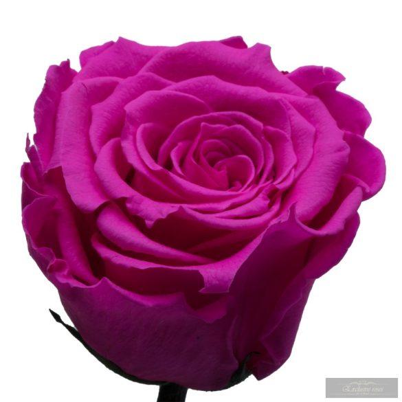 Pink Örök rózsa