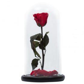 ÖRÖK RÓZSA / Forever Roses Exclusive Roses